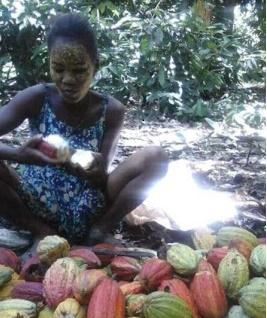 cacaoambanja